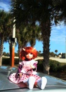 5 Star Doll Tong Tong in Florida