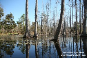 Cypress Gardens, Charleston, South Carolina, 2008