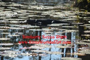 Where is the Alligator? Cypress Gardens, Charleston, South Carolina 2008