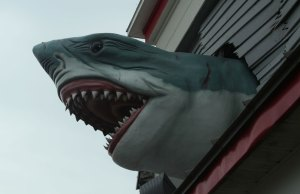 Shark, The Boardwalk, Ocean City, Maryland
