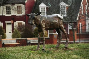 Calf Statue, Frederick, Maryland