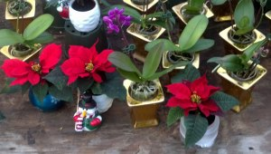 Behnke's Nurseries, December 14, 2012